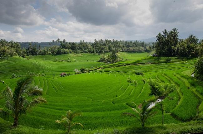 agriculture-farm